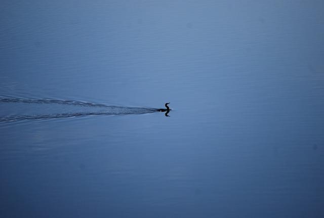 Fowl waterbird duck.