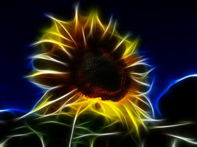 Fractal sun flower helianthus annuus, nature landscapes.