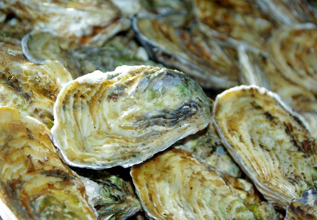 France oysters shells.