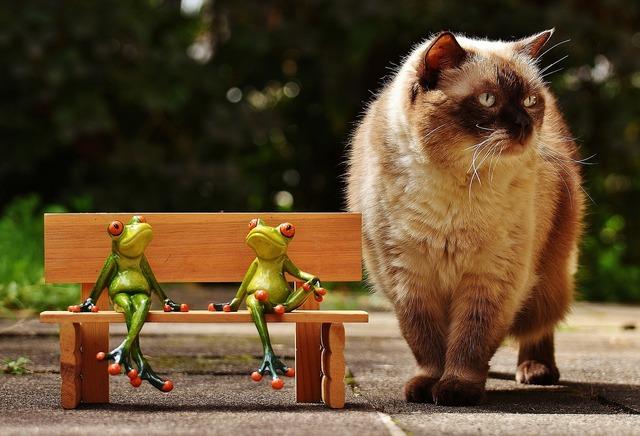 Friends sit frogs, animals.