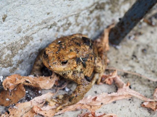 Frog brown toad, nature landscapes.