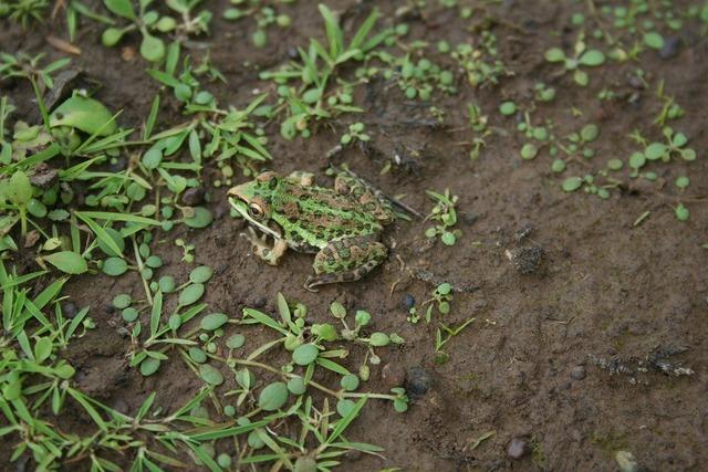 Frog nature ecology, nature landscapes.