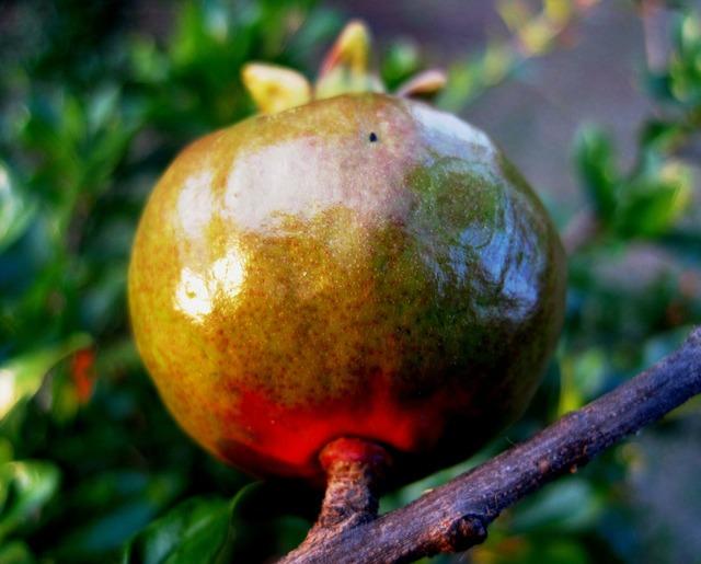 Fruit pomegranate red, food drink.