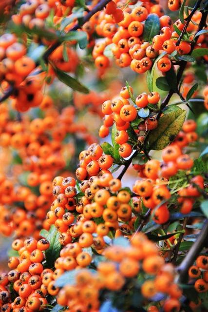 Fruits berries red, food drink.