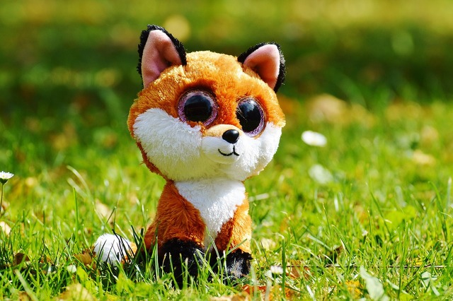 Fuchs animal nature, animals.