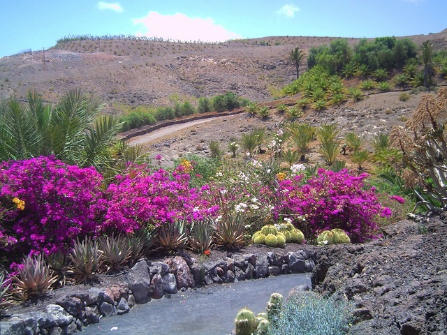 Fuerteventura holiday summer, nature landscapes.