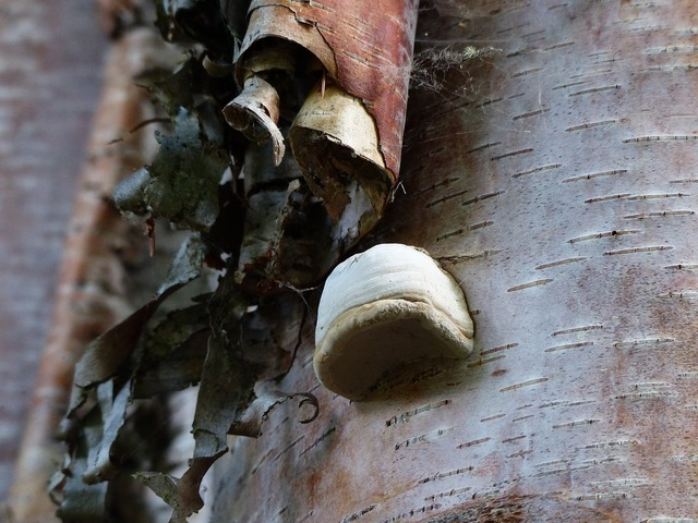 Fungus mushroom fungi, nature landscapes.