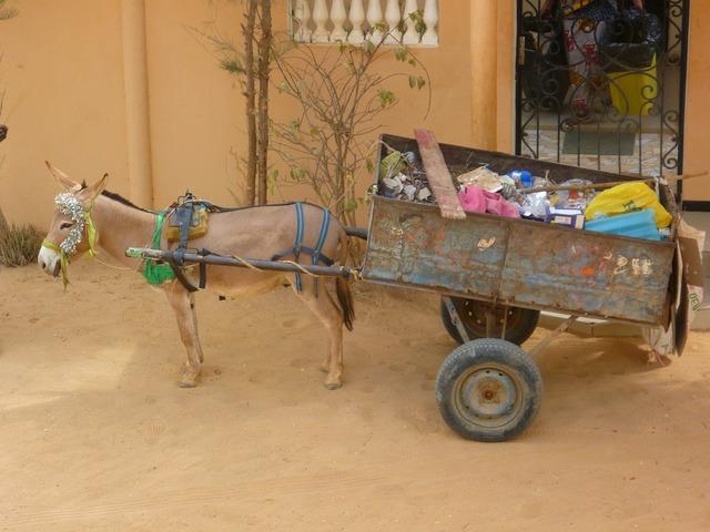 Garbage transportation donkey, transportation traffic.