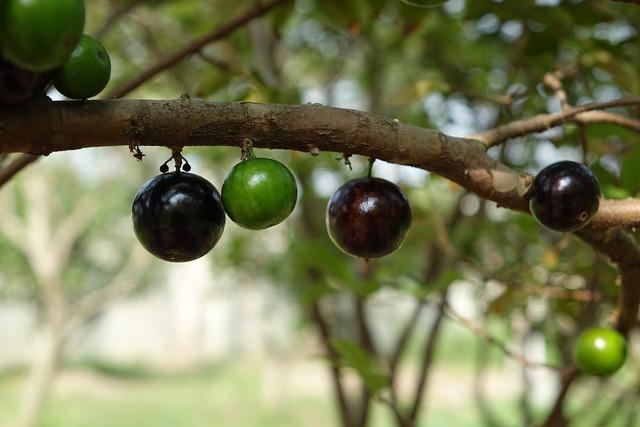 Garbo greta fruit tree grape fruit, food drink.