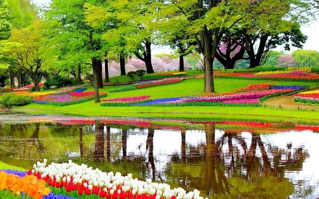 Garden flowers lake, nature landscapes.
