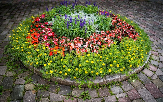 Garden flowers plant, nature landscapes.