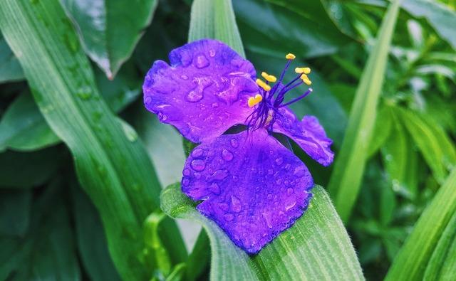 Garden flowers spring, nature landscapes.