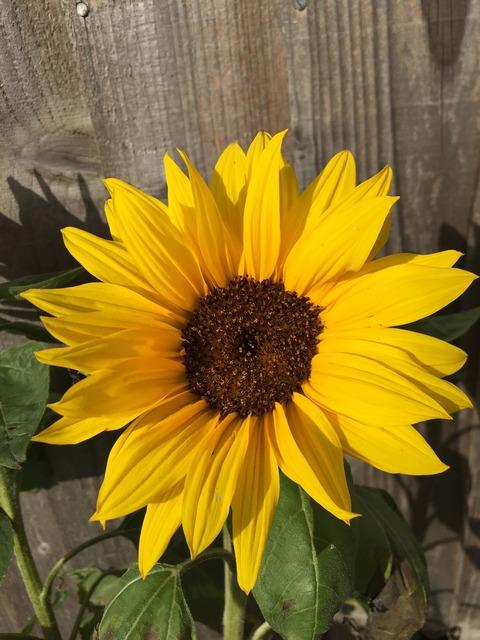 Garden summer yellow.