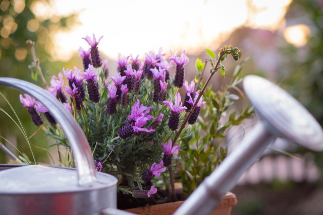 Garden watering can lavender, nature landscapes.