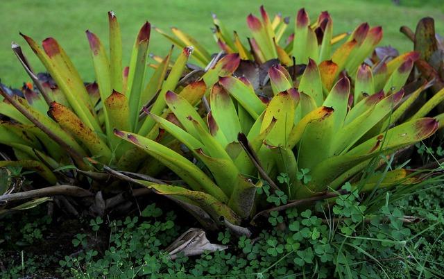 Genus exotic plant exotic botany, nature landscapes.