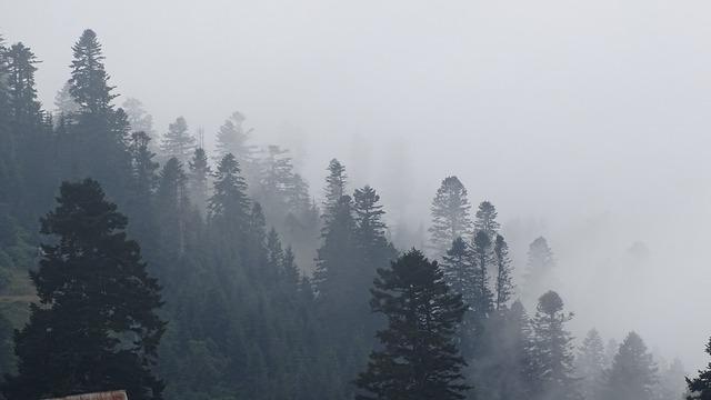 Georgia mountains fog.