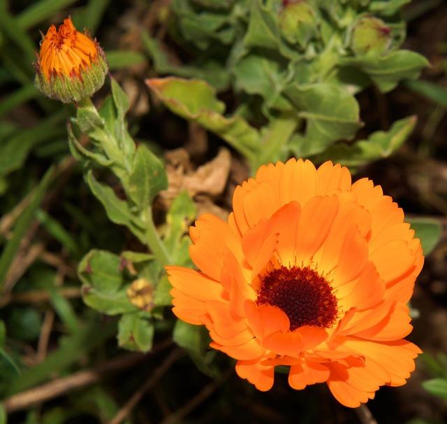 Gerbera flowers plant, nature landscapes.