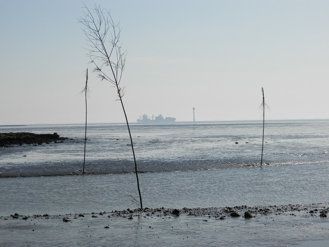 Germany wadden sea wremen.