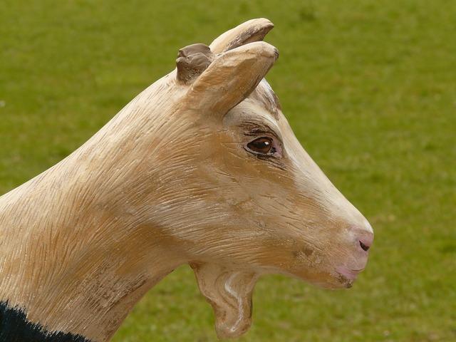 Goat geiss chamois, animals.