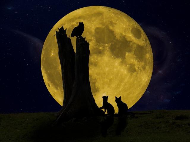 Good night moon owl, animals.