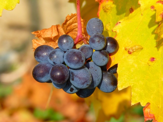 Grape grapes fruit, food drink.
