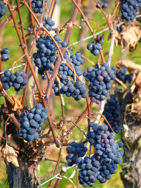 Grape grapes fruit, food drink.