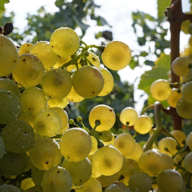 Grape white grapes fruit, food drink.