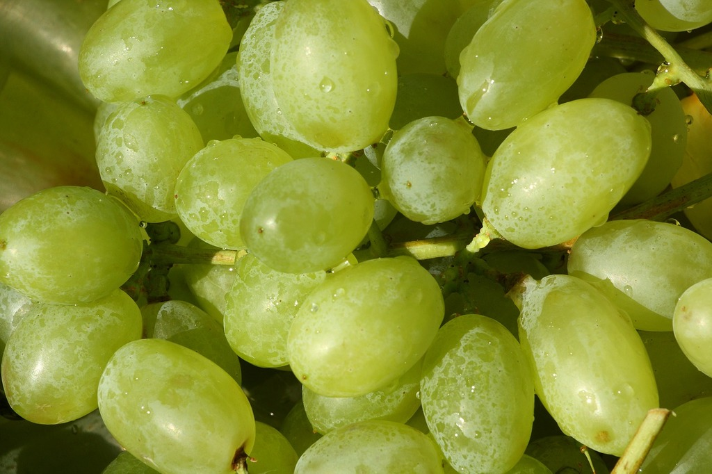 Grapes fruit wine, food drink.