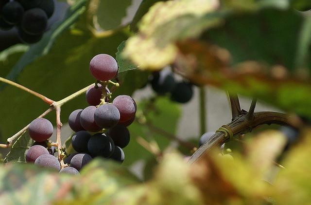 Grapes group fruit, food drink.