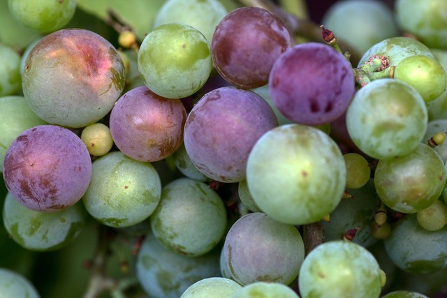 Grapes macro immature, food drink.