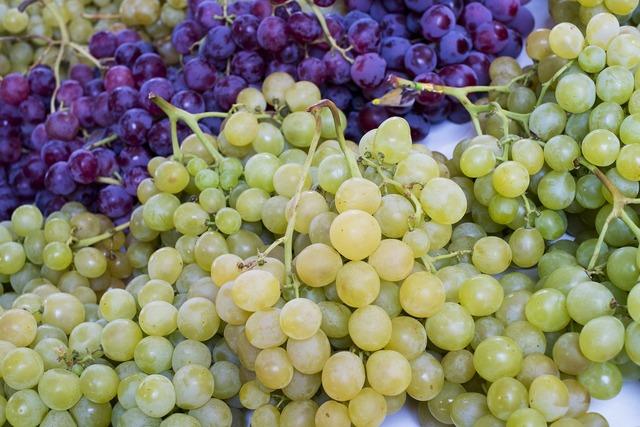 Grapes vineyard fruit, food drink.