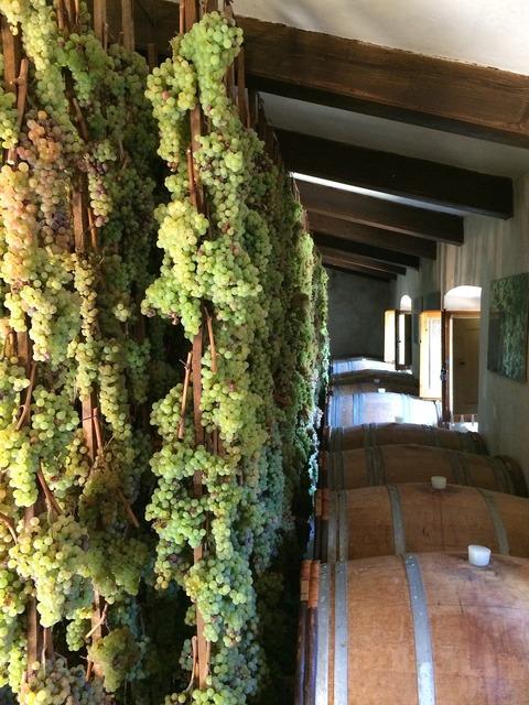 Grapes vineyard wine.
