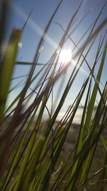 Grass beach sun, travel vacation.