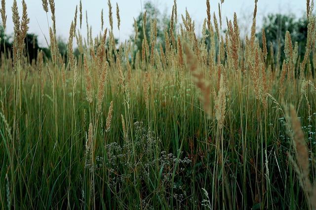 Grass field summer, nature landscapes.