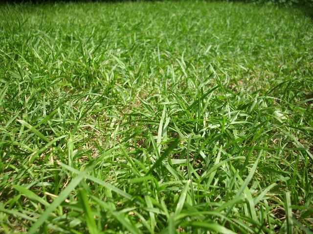 Grass ground lawn, nature landscapes.