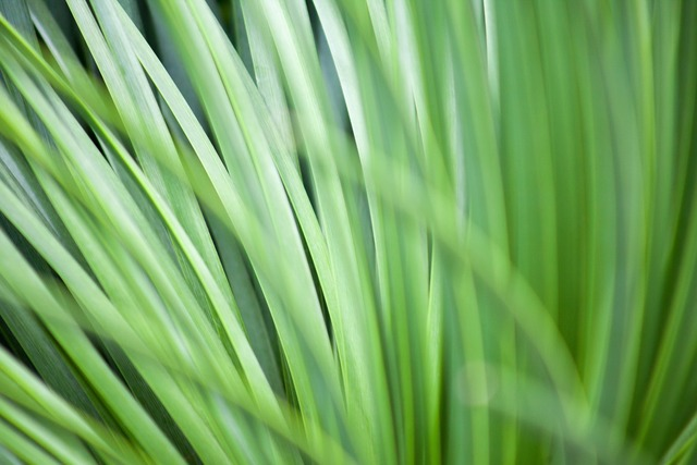 Grass macro plant, nature landscapes.
