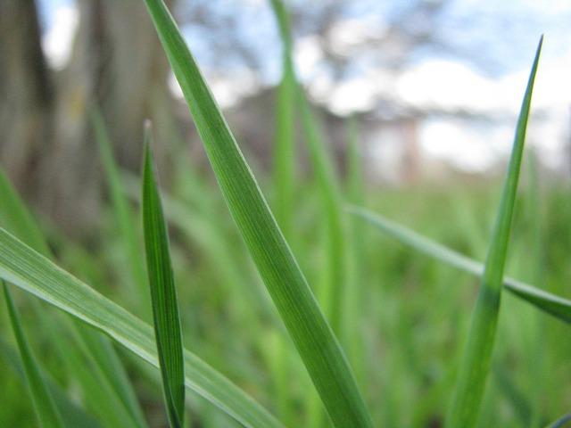 Grass plant summer, nature landscapes.