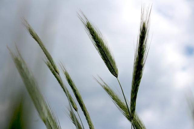 Grass sky colo, nature landscapes.