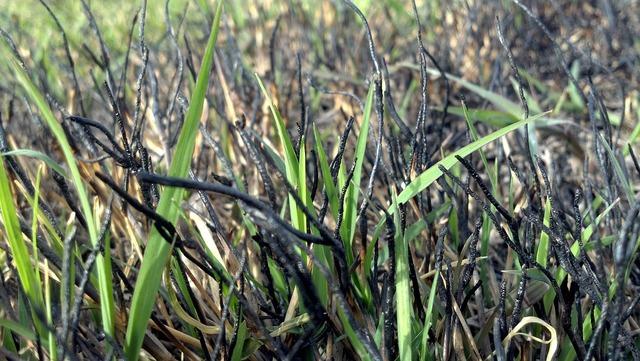 Grass springing new.