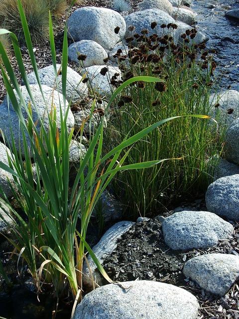 Grass stones ornamental grass, nature landscapes.