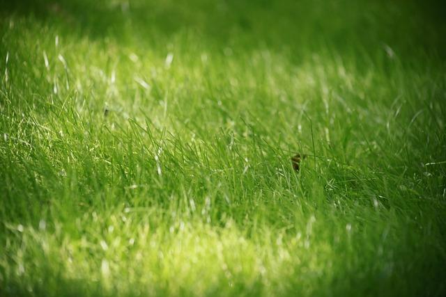 Grass summer closeup.