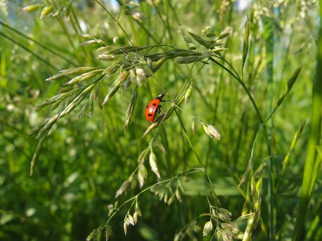 Grass summer green, animals.
