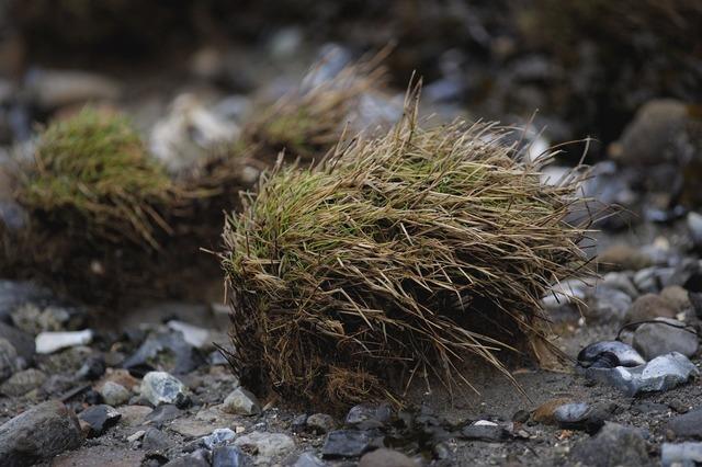 Grass tot tuft of grass, travel vacation.