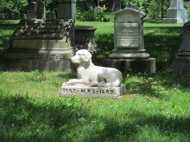Graveyard grave cemetery, animals.