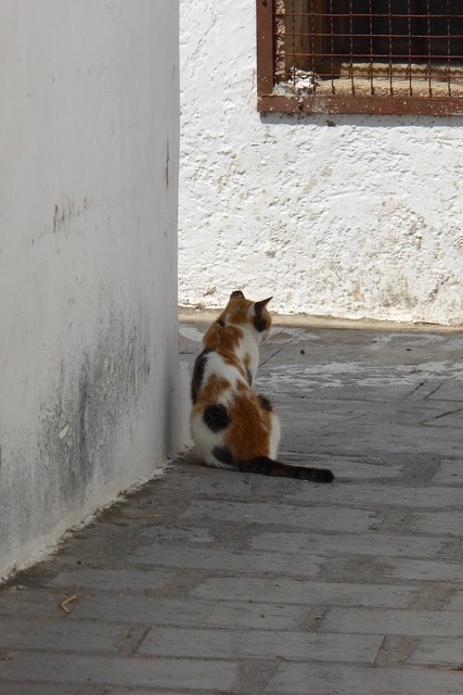 Greece cat village, animals.
