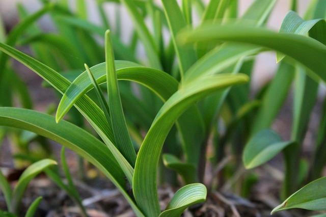 Green leaf fresh, nature landscapes.