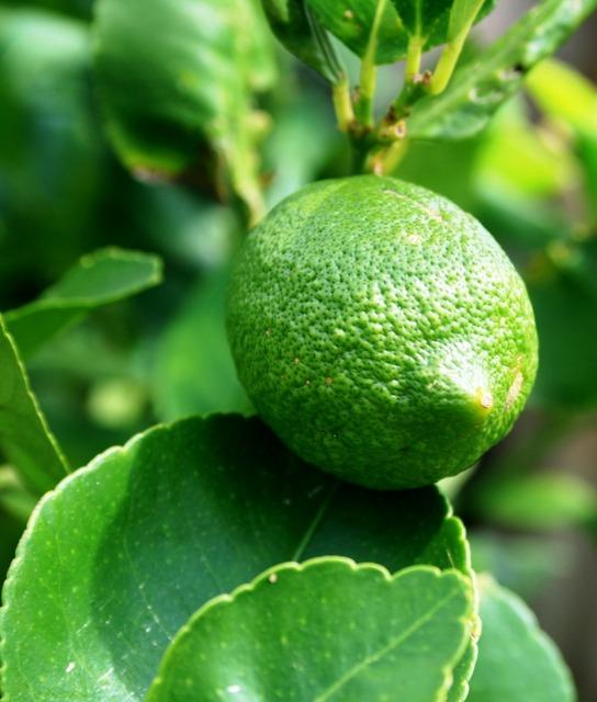 Green lemon fruit lemon, food drink.