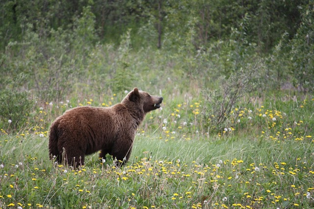 Grizzly grizzly bear bear.