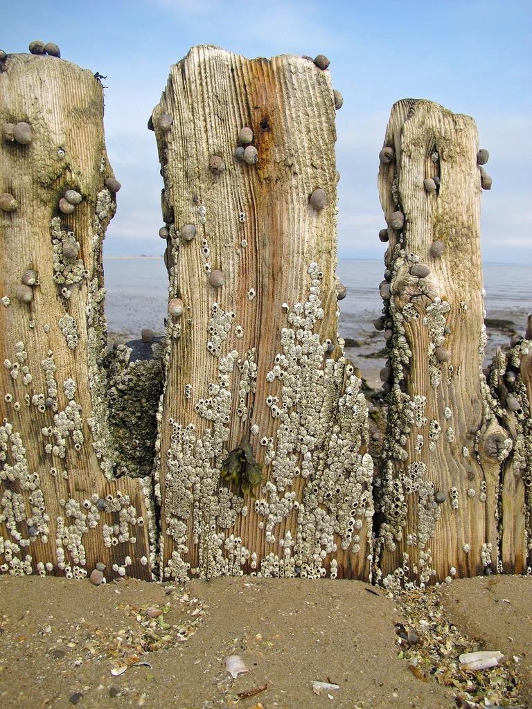Groynes sea beach, travel vacation.