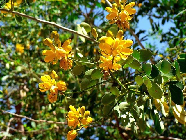 Guatemala exotic flower.